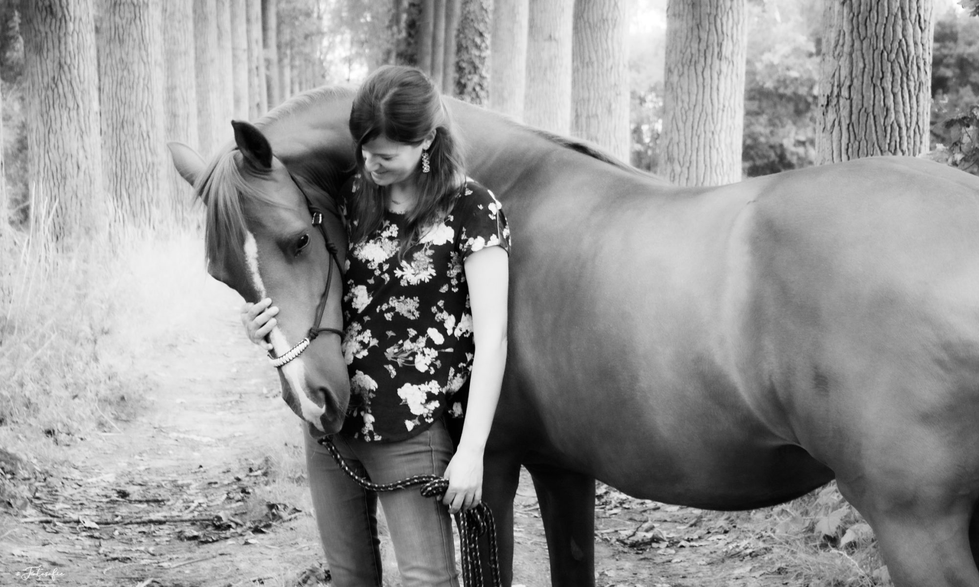 De Paardencoach